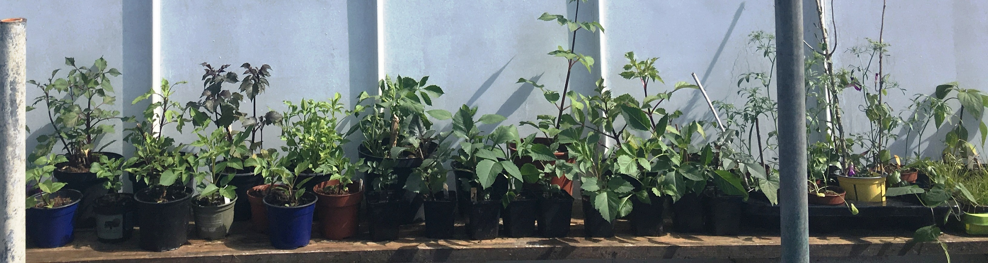 Plantenmarkt volkstuin Nut en Genoegen