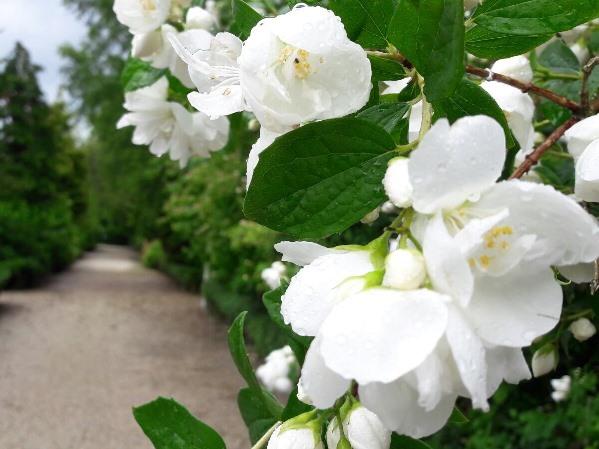 Bloemen Op Nut En Genoegen – Kopie